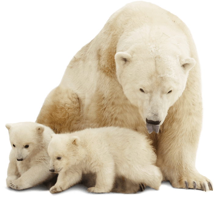 Bild zu Polarskolen